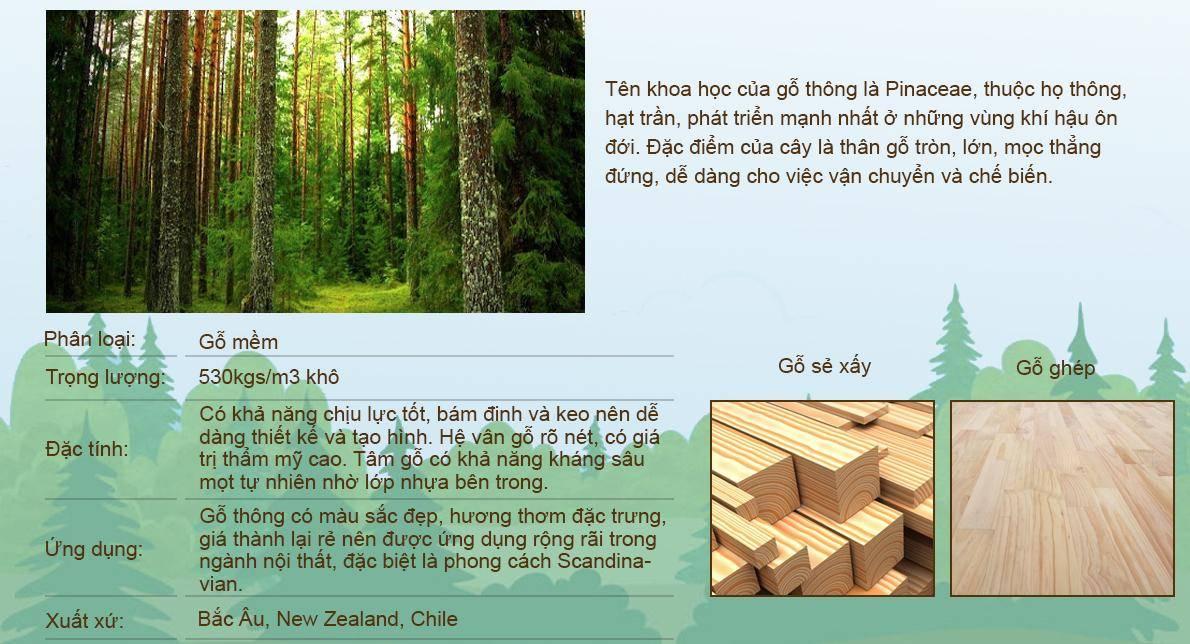 Giới thiệu gỗ thông