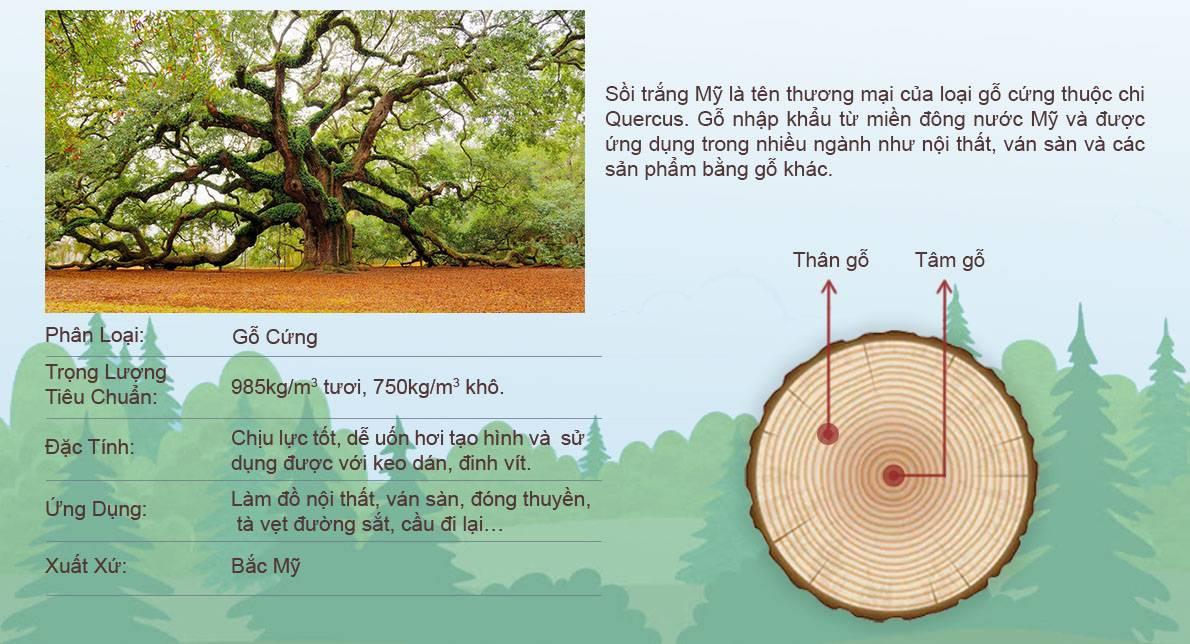 Chất liệu gỗ sồi trắng Mỹ