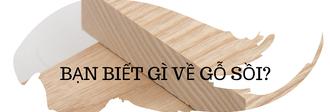 kiến thức về gỗ sồi